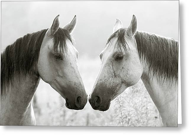 The Greys Greeting Card by Ron  McGinnis
