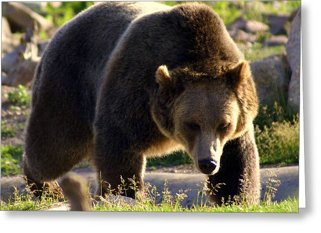 The Grizz Greeting Card by Marty Koch