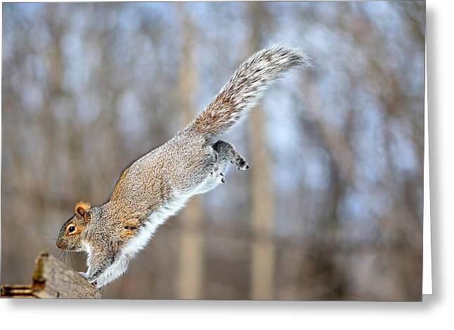 The Gymnast Gray Squirrel Greeting Card