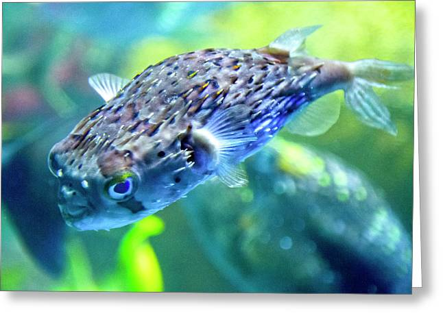 The Happy Puffer Greeting Card
