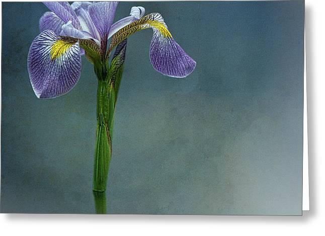 The Harlem Meer Iris Greeting Card by Chris Lord