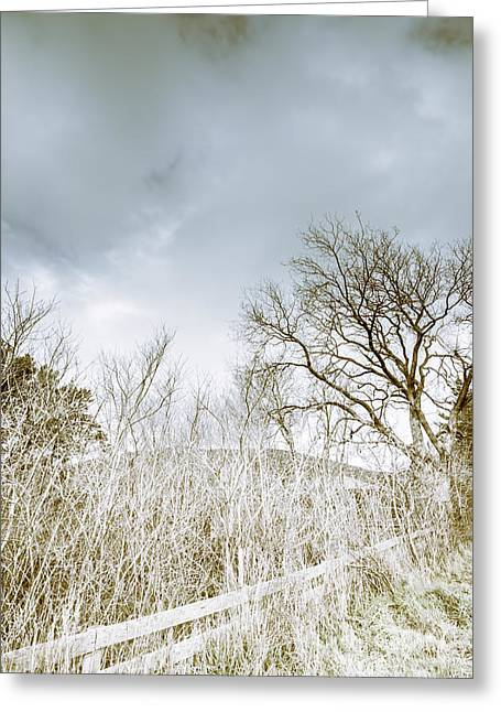 The Haunting Cold Greeting Card by Jorgo Photography - Wall Art Gallery