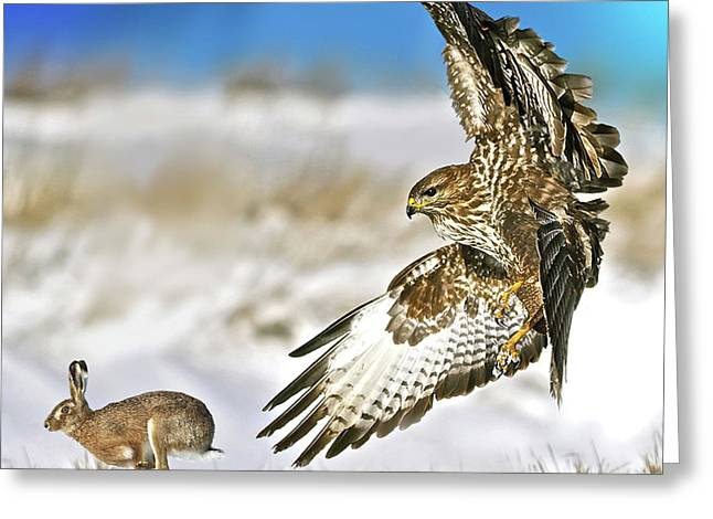The Hawk And The Hare Greeting Card by Thomas Pollart