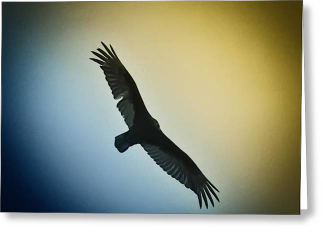 Red Tail Hawk Digital Art Greeting Cards - The Hawk Greeting Card by Bill Cannon