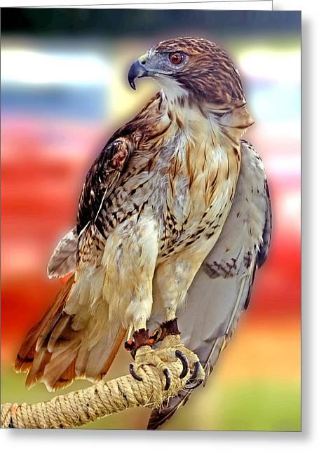The Hawk Greeting Card by Joseph Williams
