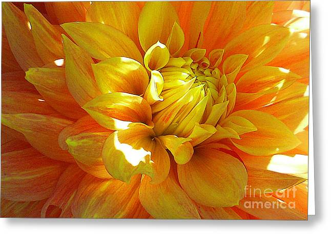 The Heart Of A Dahlia Greeting Card