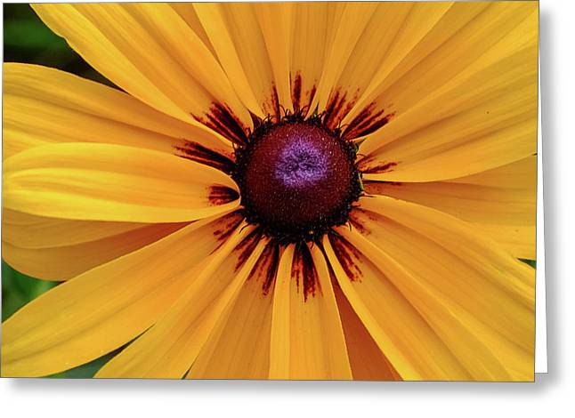 Greeting Card featuring the photograph The Heart Of A Flower by Monte Stevens