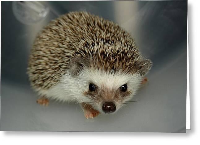 The Hedgehog Greeting Card