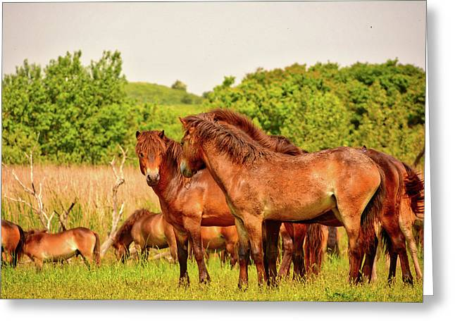 The Herd 2 Greeting Card