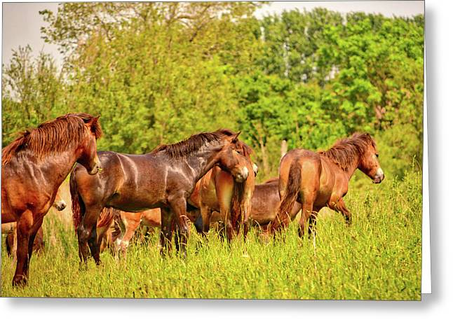 The Herd Greeting Card