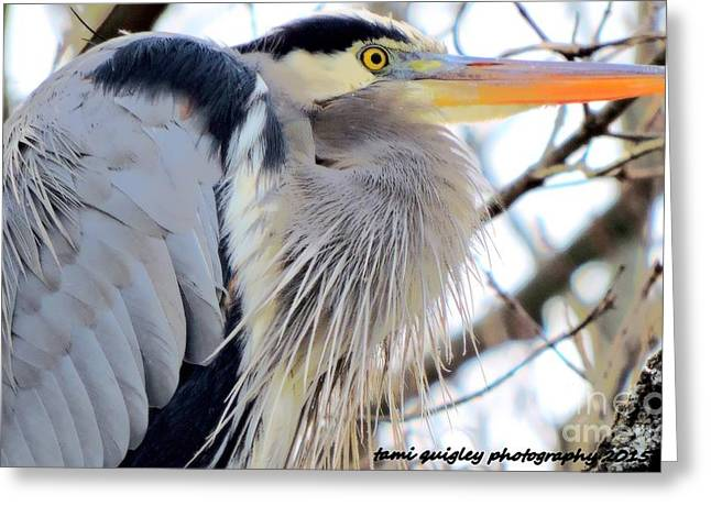 The Heron In Winter  Greeting Card