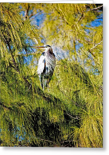 The Heron's Whiskers Greeting Card