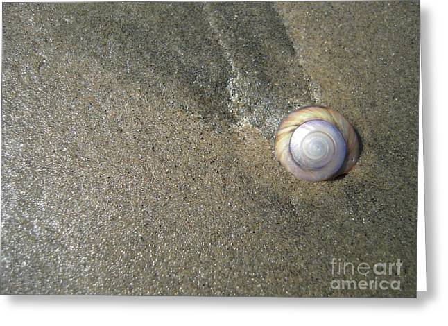 The Hidden Treasures Of The Sand Greeting Card by Anna Eigler