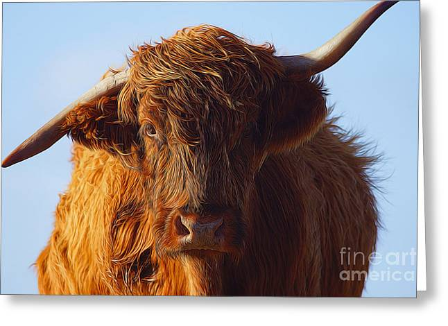 The Highland Cow Greeting Card by Nichola Denny