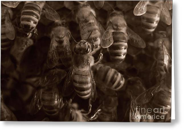 The Hive Greeting Card