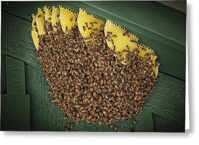Yellow Jacket Greeting Cards - The Hive Greeting Card by Kelley King