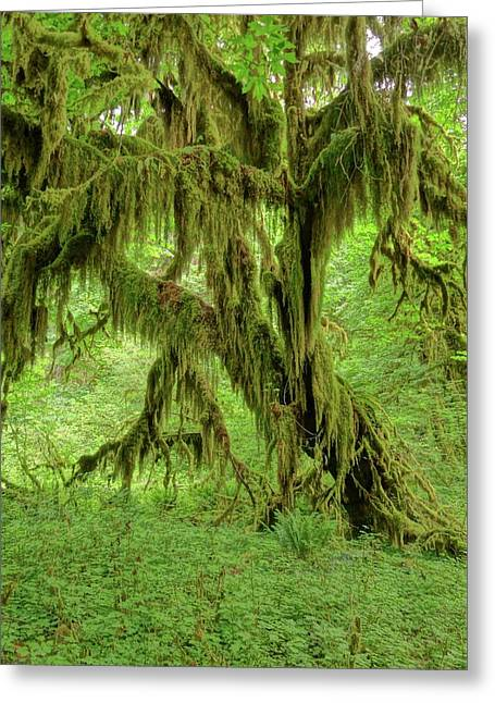 The Hoh Rainforest Greeting Card by Dan Sproul