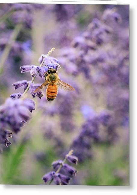 The Honey Bee And The Lavender Greeting Card