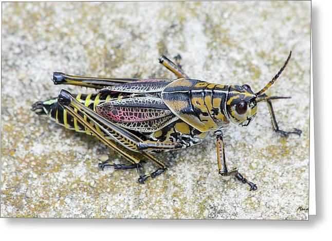 The Hopper Grasshopper Art Greeting Card by Reid Callaway