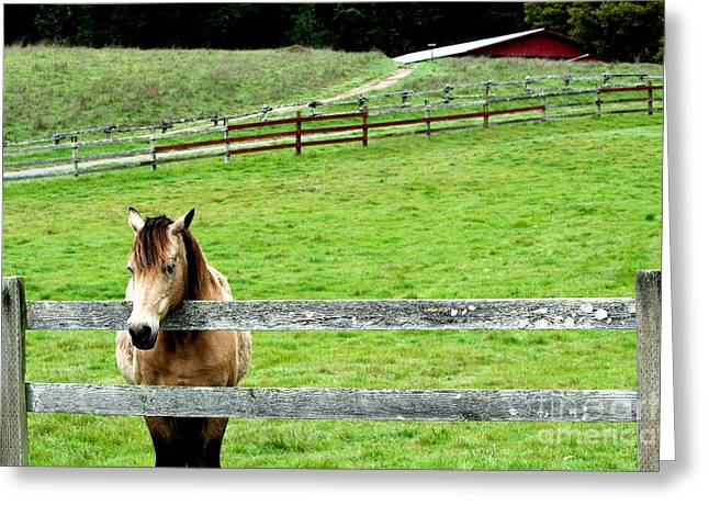 The Horse And The Red Barn . R5913 Greeting Card by Wingsdomain Art and Photography