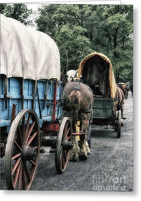 The Horse Train  Greeting Card by Steven Digman
