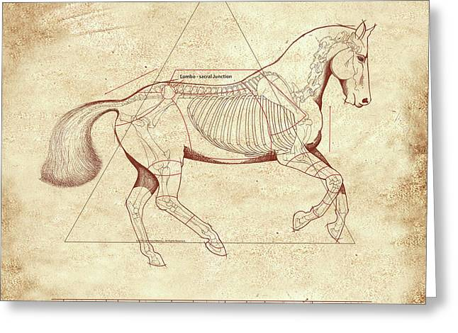 The Horse's Canter Revealed Greeting Card by Catherine Twomey
