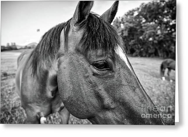 the Horses of Blue Ridge 1 Greeting Card