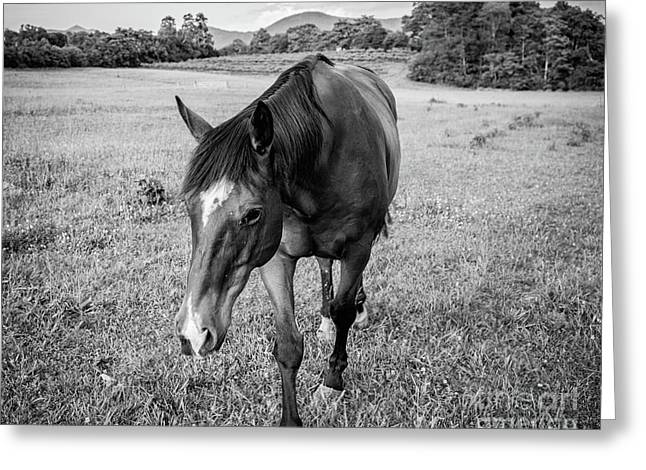 the Horses of Blue Ridge 3 Greeting Card