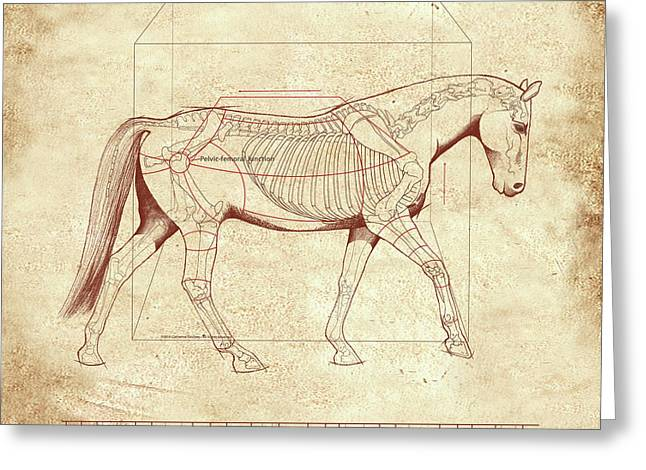 The Horse's Walk Revealed Greeting Card by Catherine Twomey