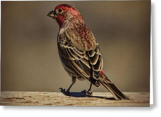The House Finch Greeting Card