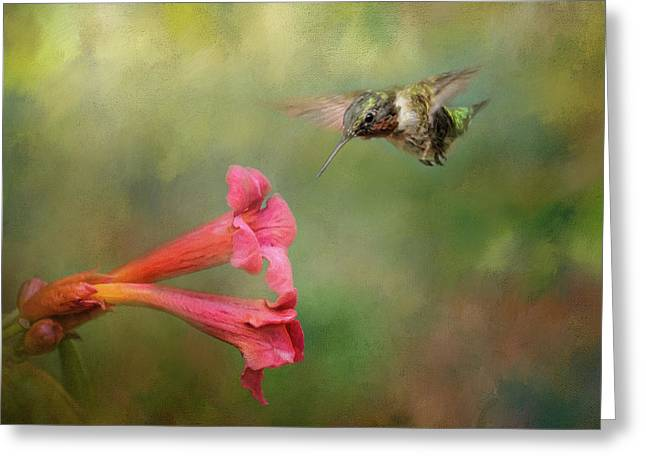 The Hummingbird And The Trumpet Flower Greeting Card