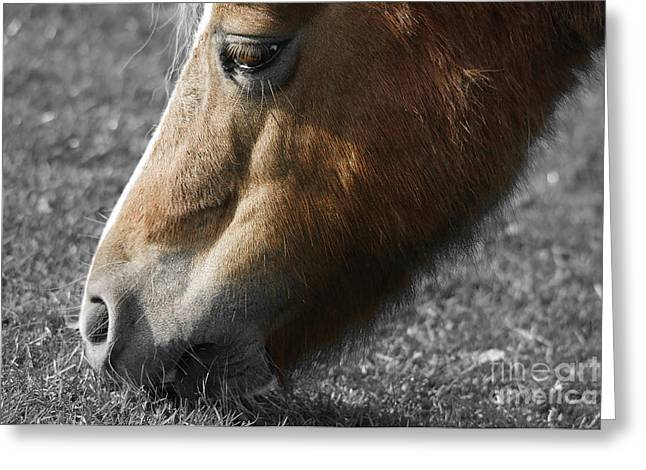 The Hungry Horse Greeting Card