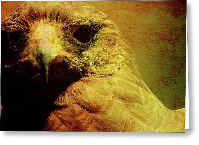 Red Tail Hawk Digital Art Greeting Cards - The Hunter . Portrait of a Hawk . Square . 40D7877 Greeting Card by Wingsdomain Art and Photography