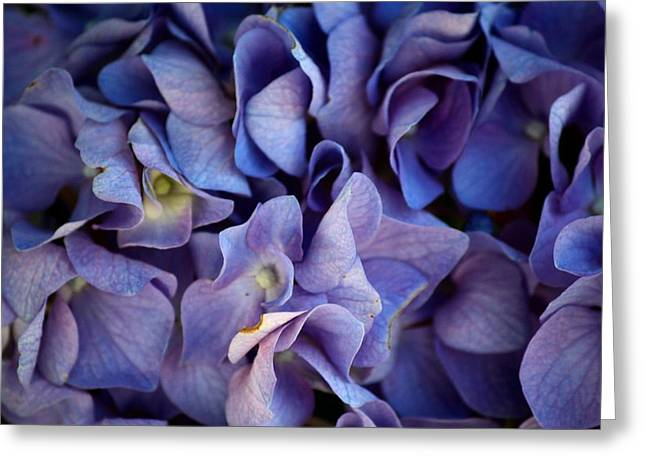 The Hydrangea Greeting Card by Karen Scovill