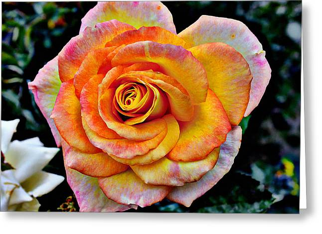 Greeting Card featuring the mixed media The Imperfect Rose by Glenn McCarthy