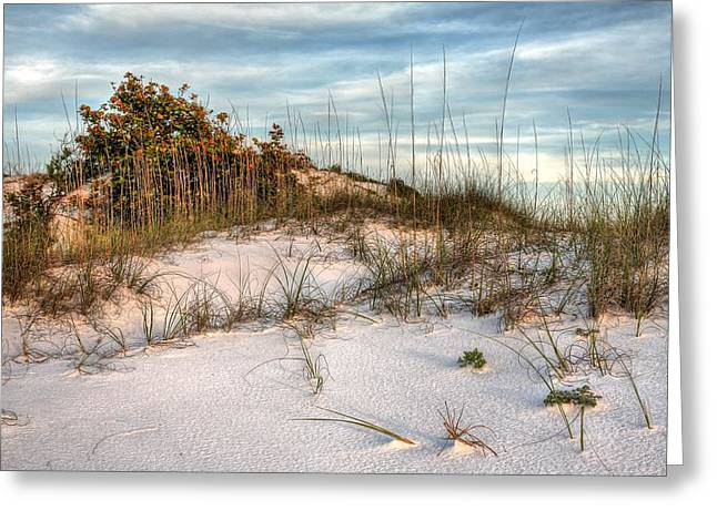 The Inner Dunes Of Pensacola Beach Greeting Card by JC Findley