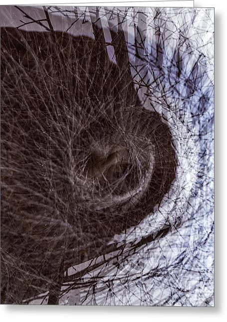 The Inner Ear Of Trees Greeting Card by Deborah Hughes