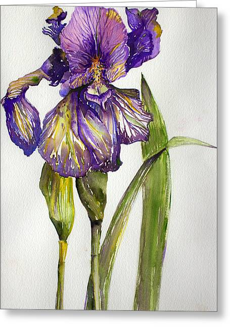 The Iris Greeting Card by Mindy Newman