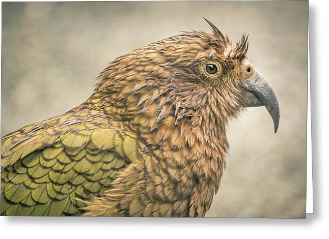 The Kea Greeting Card
