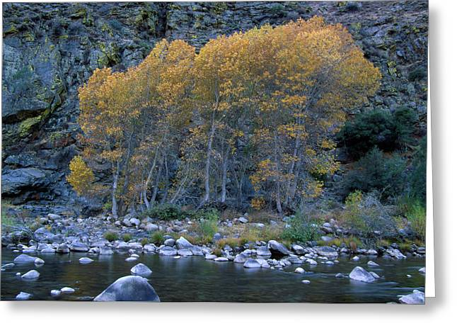 The Kern River Greeting Card by Soli Deo Gloria Wilderness And Wildlife Photography