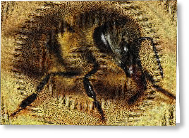 The Killer Bee Greeting Card by ISAW Gallery
