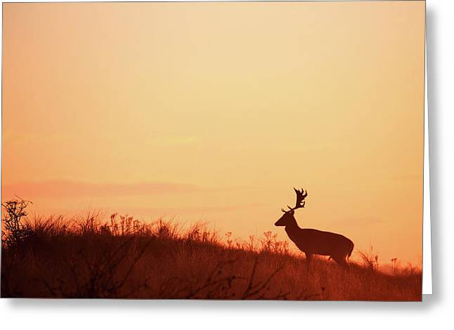 The King Of The Hill Greeting Card by Roeselien Raimond