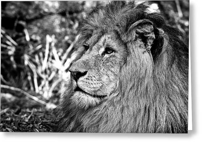 The King Of The Jungle Greeting Card by Sascha Richartz