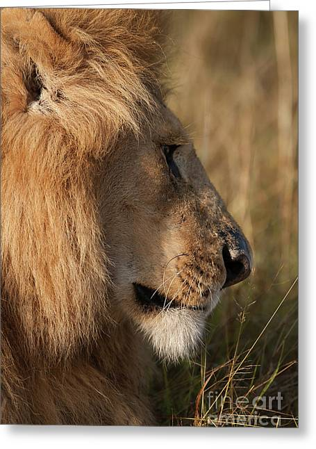 The King Greeting Card by Nichola Denny