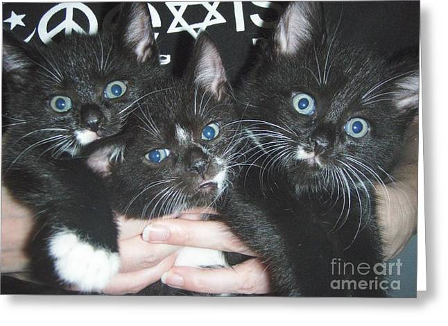 The Kittidiots Greeting Card