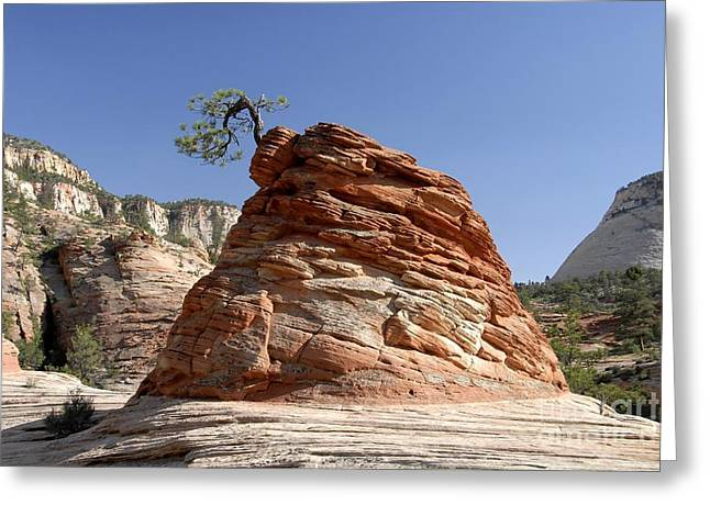 The Land Of Zion Greeting Card by David Lee Thompson