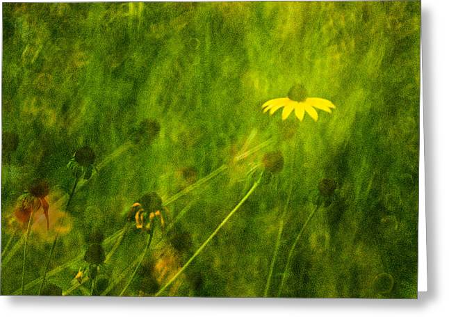 The Last Black-eyed Susan Greeting Card
