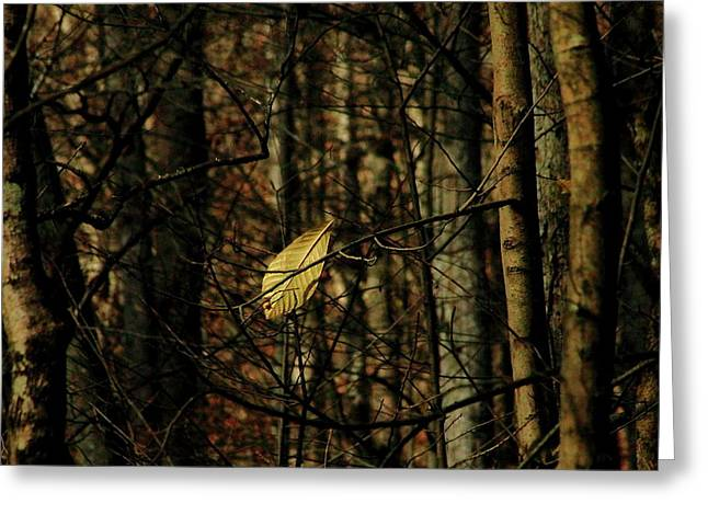 The Last Leaf Greeting Card by Bruce Patrick Smith