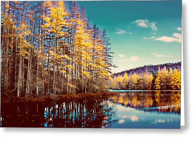 The Last Of The Tamarack Color Greeting Card by David Patterson