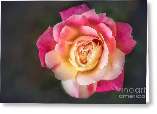 The Last Rose Of Summer, Painting Greeting Card